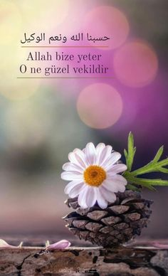 Allah Islam, Plants, Quotes, Bag, Quotations, Plant, Quote, Shut Up Quotes, Allah