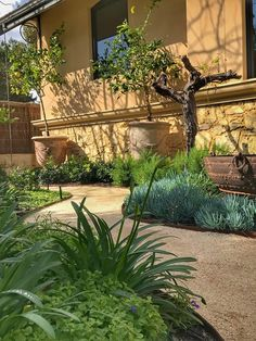 In-ground - Straightcurve - AU Corten Steel, Gallery, Coastal, Plants, Design, Planters, Plant, Planting