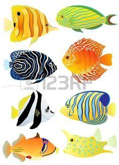 Collectie van kleurrijke tropische vissen  photo