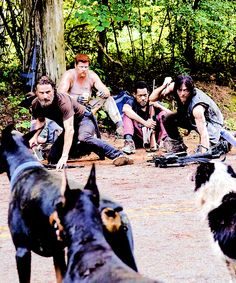 Just some dogs pass by - and rick and daryl look so hot I can't take it ;)