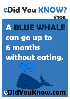 A blue whale can go up to 6 months without eating. Wow Facts, Wtf Fun Facts, True Facts, Random Facts, Crazy Facts, The More You Know, Good To Know, Whale Facts, Unusual Facts