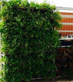 Different plants in atlantis green wall -nursery -doha