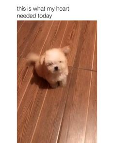 Likes, 367 Comments - Doguild Funny Animal Jokes, Funny Animal Pictures, Animal Memes, Cute Funny Dogs, Cute Funny Animals, Funny Pets, Funny Humor, Baby Animals Super Cute, Cute Little Animals