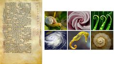 Fibonacci sequence in Liber Abaci and Fibonacci spiral in nature Spirals In Nature, Fibonacci Spiral, Poster, Art, Art Background, Kunst, Performing Arts, Golden Ratio, Billboard