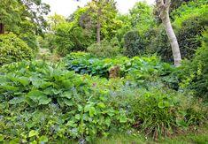 Kan man have en nordvendt - og frodig - have? Shade Garden, Garden Inspiration, Garden Ideas, Man, Beautiful Flowers, Planters, Gardening, Houses, Blog