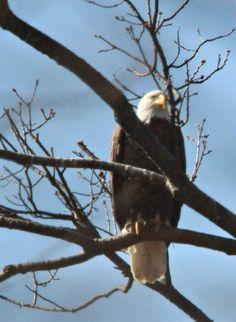 Enjoying the sun - Spring Grove, PA codorus state park