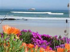beach flowers - Bing Images