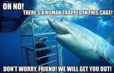 """bloglosingrip - fotos engraçadas 13 - (Ah não! Tem um humano preso nessa jaula! Não se preocupe amigo! Nós vamos te tirar daí!). Os tubarões são sempre muito mal entendidos pelos humanos... mas ninguém acredita que eles são """"tão bonzinhos""""..."""