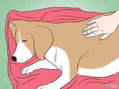 Make Sure That Your Dog Is Ok After Giving Birth Step 2.jpg