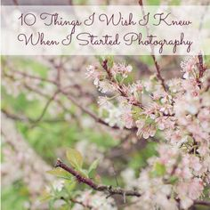 15 Letter PhotographsA to Z Photography Project,15 Light Filled Photographs,Finding the Light to Enhance Your Photography,author: Steph Stephphotography tips and tricks