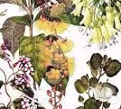 New Zealand flora