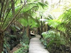 Rain forest in New Zealand. Seems almost prehistoric. See more at www.travelswithtalek.com