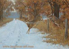 Whitetail Deer Paintings | Whitetail Art Prints