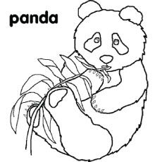 9 Best Panda Bears Images On Pinterest Panda Activities Crafts