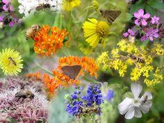 pollinator visual guide