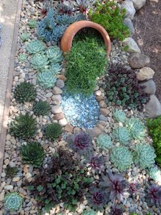 2014 BBY - succulents in Anne's garden