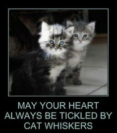 May your heart always be tickled by cat whiskers