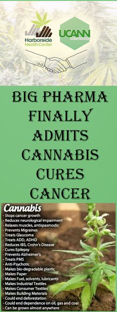 "In April 2015 the National Institute of Drug Abuse acknowledged that cannabis kills cancer cells and dramatically reduces the growth of new brain cancer cells. This was a startling admission, considering that federal government's position on cannabis retains it as a Schedule 1 drug with ""no medical benefit."" Research has continued despite this roadblock, and Continue Reading"