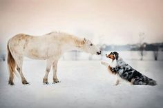 Dreamlike dog portraits by Kristýna Kvapilová, a talented old self-taught photographer, retoucher, and dogs lover who was born in Olomouc and currently… Horses And Dogs, Animals And Pets, Cute Animals, Best Dog Photos, Australian Shepherd Dogs, Dog Modeling, Dog Portraits, Beautiful Dogs, Animal Photography