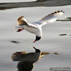 I saw a bird carving of a swallow that had a similar pose. How do you time a shot like this?  http://newswatch.nationalgeographic.com/2012/03/10/top-25-wild-bird-photographs-of-the-week-5/
