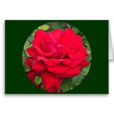 """Framed Red Rose Valentine's Day Card - Dimensions: 5"""" x 7"""" (portrait) or 7"""" x 5"""" (landscape). Printed on ultra-heavyweight (120 lb.) card stock with a gloss finish. Each card comes with a white envelope. No minimum order. Available on Note and Big Card size - $3.30"""