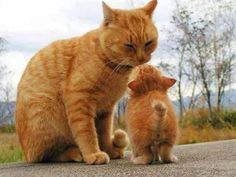 Orange cats! I'm guessing a mom and a lil baby kitten!!!
