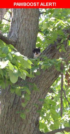 Is this your lost pet? Found in Fort Wayne, IN 46807. Please spread the word so we can find the owner!  Black and white kitten in a tree. Guessing about 6 weeks old. A friend is going to try and rescue it.  Brooklyn Ave and W Packard Ave