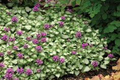 Make the Best of the Shade Garden | Minnesota Gardener Magazine Web Articles