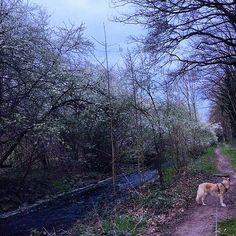 6 am in the morning, walking the dog. Spring has come to Germany.