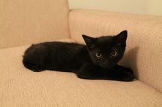 Bruce the cat #brucethecat #kitten facebook.com/brucethekitten brucethecat.co.nz