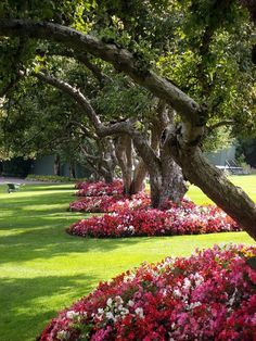i love these flowers around the bases of these trees