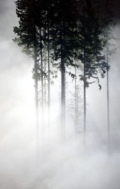 ♂ Amazing nature misty trees silence nature by Long Bach Nguyen Tree Forest, Dark Forest, Foggy Forest, Landscape Photography, Nature Photography, Art Magique, Foto Art, Belle Photo, Black And White Photography