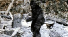 Also known as the Sasquatch, sightings usually come out of the American Northwest. Although most experts consider the Bigfoot legend to be a combination of folklore and hoaxes, there are several that withhold their reservations. Like the Loch Ness monster, they say, Bigfoot may be a living remnant from the time of the dinosaurs – specifically a Gigantopithecus blacki – a supersize ape.