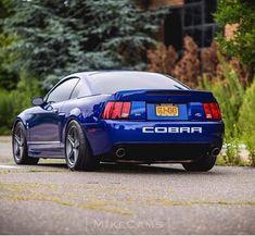 Posh Cars, New Edge Mustang, Mustang Emblem, Danielle Bregoli, Mustang Cobra, Ford Mustangs, Car Ford, Ford Motor Company, Car Manufacturers