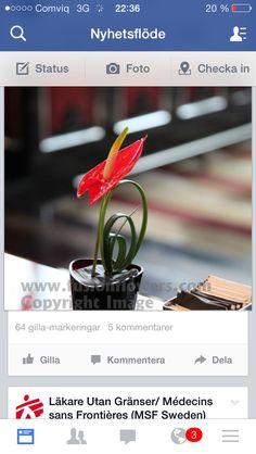 Anthurium grass
