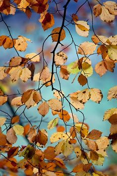 ~Autumn Leaves~ Burnished gold fluttering against turquoise . . .