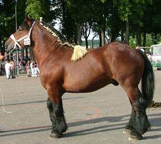 France Trait - Auxois: proche des chevaux Ardennais et Trait du Nord, qui ont reçu beaucoup d'apport de sang Belge et Néerlandais. C'est un cheval de 1,6 à 1,68m au garrot, généralement bai ou rouan parfois aubère ou alezane. C'est une race menacée.