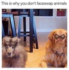 lol Animal Face-swap animal-faceswap