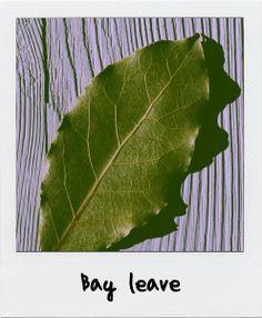 Bobkový list....bay leave.