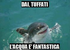 Celebrate Shark Week With Misunderstood Shark - Funny Animal Photos, Animal Memes, Funny Animals, Funny Pictures, Cute Animals, Animal Captions, Funniest Animals, Funny Captions, Funny Pets