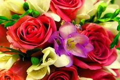 Colorful Bouquet of Flowers Wallpaper Background!