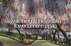 Walk through the wisteria flower tunnel in Japan.