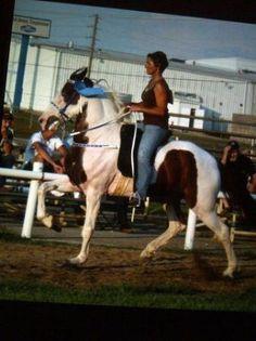 RACKING HORSE GELDING - $2500 (Manchester KY)