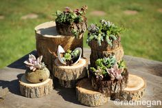Succulents in a Tree Bark Planter. $32.00, via Etsy. - - ANOTHER GREAT EXAMPLE!
