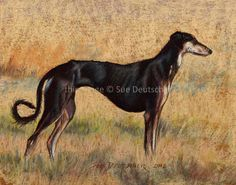 Saluki Hound Dog Portrait art 8x10 print from painting by Sue Deutscher, signed, matted - $9.99 - An 11x14 print is also available - the original is available at http://suedeutscher.com