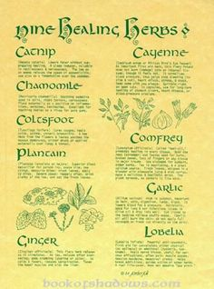 Herbs:  Nine Healing #Herbs. I've tried comfrey and it is used in lotions with the name of Allantoin.