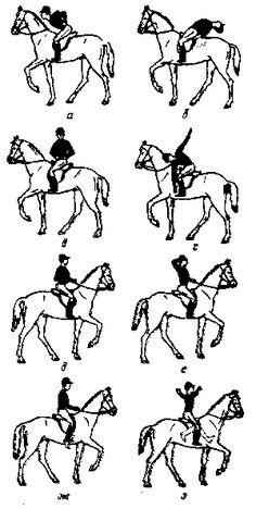Рис. 22. Гимнастические упражнения на лошади: а, б — наклоны вперед и назад, в — повороты туловища, г — доставание носка противоположной рукой, д — прогибание поясницы рукой, е — отведение локтя назад, ж — кругообразное движение ступней, з — качание голеней (шенкелей).