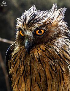 Owl by saeed bafadel on 500px
