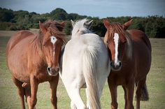Horse photo, horse photography, equine art, nursery decor, horse art, ranch decor by MitchMcfarlanePhotos on Etsy