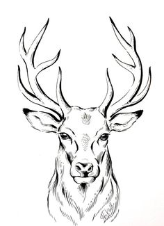 ORIGINAL deer ink drawing deer Illustration stag animal art line drawing wall art gift Natalia Eck Hirsch Illustration, Deer Illustration, Animal Illustrations, Ink Drawings, Animal Drawings, Drawing Sketches, Drawing Ideas, Drawing Drawing, Drawing Animals